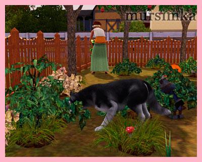Домашние питомцы: собаки
