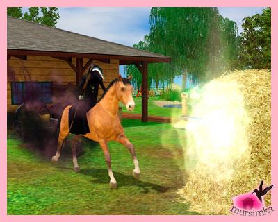 Домашние питомцы: лошади