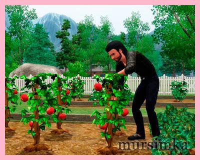 Садоводство: навык и карьера